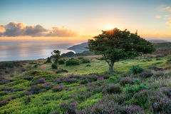 Exmoor-Sonnenaufgang Stockfotografie