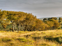 Exmoor trees, autumn colours. UK, natural landscape. Royalty Free Stock Images