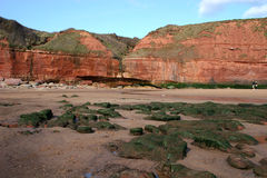 Exmouth cliffs and beach Royalty Free Stock Photo