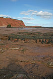 Exmouth cliffs and beach Stock Photography