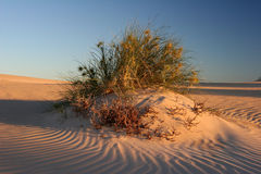 Exmouth plaży pętaczka Obrazy Royalty Free