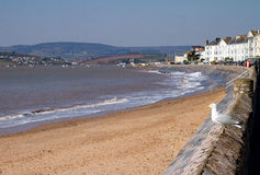 Seagull Exmouth Devon England Royalty Free Stock Images