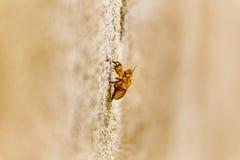 Exoskeleton of bee Stock Photography