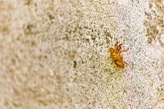 Exoskeleton of bee Stock Images