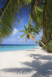 Exotic. View under palm trees, Maldives Royalty Free Stock Photography
