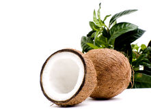 Exotic. Fresh Coconuts isolated on white Stock Photography