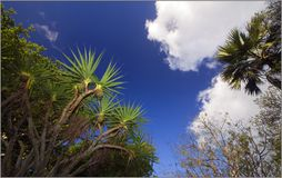 Exotic. Trees sky mauritius forest Stock Photo