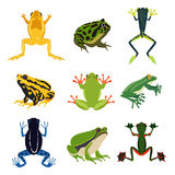 Exotic amphibian set. Different frogs in cartoon style. Green animals isolate on white Stock Images
