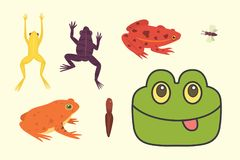 Exotic amphibian set. Frogs in different styles Cartoon Vector Illustration isolated. tropical animals.  Stock Photo