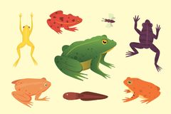 Exotic amphibian set. Frogs in different styles Cartoon Vector Illustration . tropical animals.  Royalty Free Stock Images