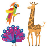 Exotic_animals. Parrot, peacock and giraffe. Vector illustration Royalty Free Stock Image