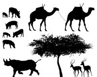 Exotic animals - vector set. Exotic trees and animals, vector set Royalty Free Stock Image