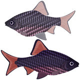 Exotic aquarium fish. Royalty Free Stock Photography