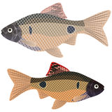 Exotic aquarium fish. Stock Image