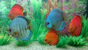 Exotic aquarium Royalty Free Stock Images