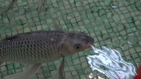 Exotic Aquarium fishes swim stock footage