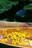 Exotic arrangement Stock Photos