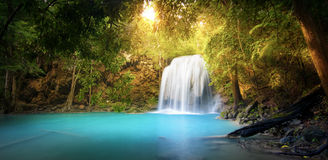 Exotic background of beautiful jungle forest with waterfall Royalty Free Stock Photos