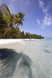Exotic beach. Maldives tropical paradise beach with palm trees Royalty Free Stock Photo