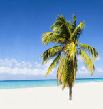 Exotic beach with beautiful alone palm tree enteri. Ng the ocean against azure water and blue sky Royalty Free Stock Photography