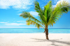 Exotic beach and coconut palm tree Saona Island, Dominican Repub Royalty Free Stock Images
