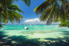Exotic Beach in Dominican Republic. Palm trees on the sandy shor Stock Photos