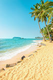 Exotic beach with golden sand and palm trees Royalty Free Stock Image