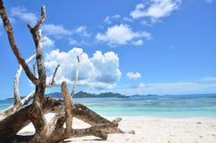 Exotic beach Stock Photos