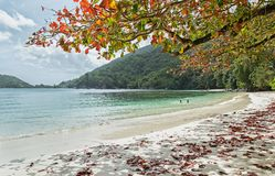 Exotic beach with white sand, azure water, green hills and red leaves on the tree. Port Launay, Seychelles Stock Photo
