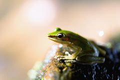 Exotic beautiful green frog and water splashes. Close-up stock photos