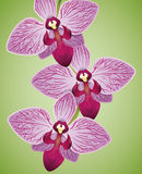 Exotic Beautiful Orchids Purple and Fuchsia Colored Isolated, Vector Illustration Stock Image