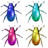 Exotic beetles wild insect stock illustration