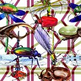 Exotic beetles wild insect pattern in a watercolor style. Full name of the insect: rare beetles. Aquarelle wild insect for background, texture, wrapper pattern Stock Photos