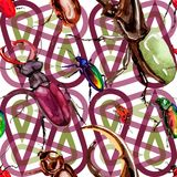 Exotic beetles wild insect pattern in a watercolor style. Full name of the insect: rare beetles. Aquarelle wild insect for background, texture, wrapper pattern Royalty Free Stock Images