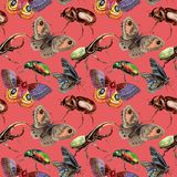 Exotic beetles wild insect pattern in a watercolor style. Full name of the insect: rare beetles. Aquarelle wild insect for background, texture, wrapper pattern Royalty Free Stock Photos