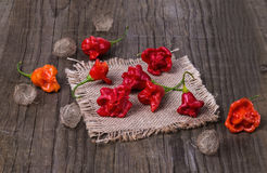 Exotic bell shaped capsicum on a burlap cloth Royalty Free Stock Photography