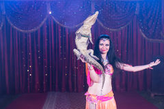 Exotic Belly Dancer Holding Small Crocodile Stock Photos