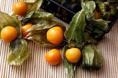 Exotic berries. Some exotic berries with the name physalis stock image