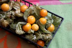 Exotic berries. Some exotic berries with the name physalis stock photos