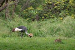 Exotic bird. An exotic bird feeding in a tropical setting Stock Image