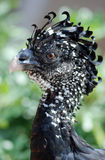 Exotic bird. Close up view of an exotic bird Royalty Free Stock Photography