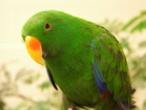Exotic Bird Royalty Free Stock Photography