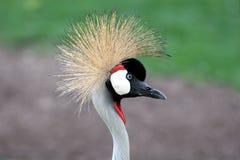 Exotic bird. Closeup of an exotic bird Stock Images