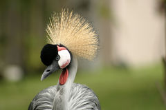 Exotic bird Royalty Free Stock Photo