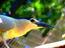 An exotic bird royalty free stock photography