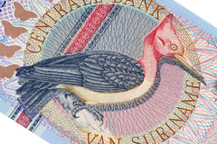 Exotic bird on banknote from Suriname Royalty Free Stock Images