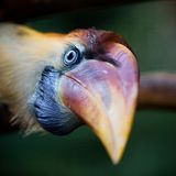 Exotic bird Royalty Free Stock Images