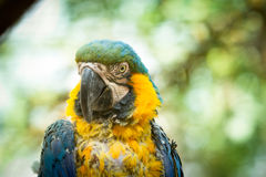 Exotic bird that experienced Animal Cruelty. Close up royalty free stock photography