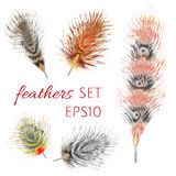 Exotic bird feather set. Vector illustration. Isolated colorful feathers Stock Photos