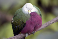 Exotic Bird I Stock Images